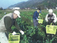 img-photo-services-agricultural-03