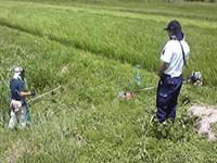 herbicide-02