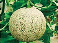 農産品・園芸3